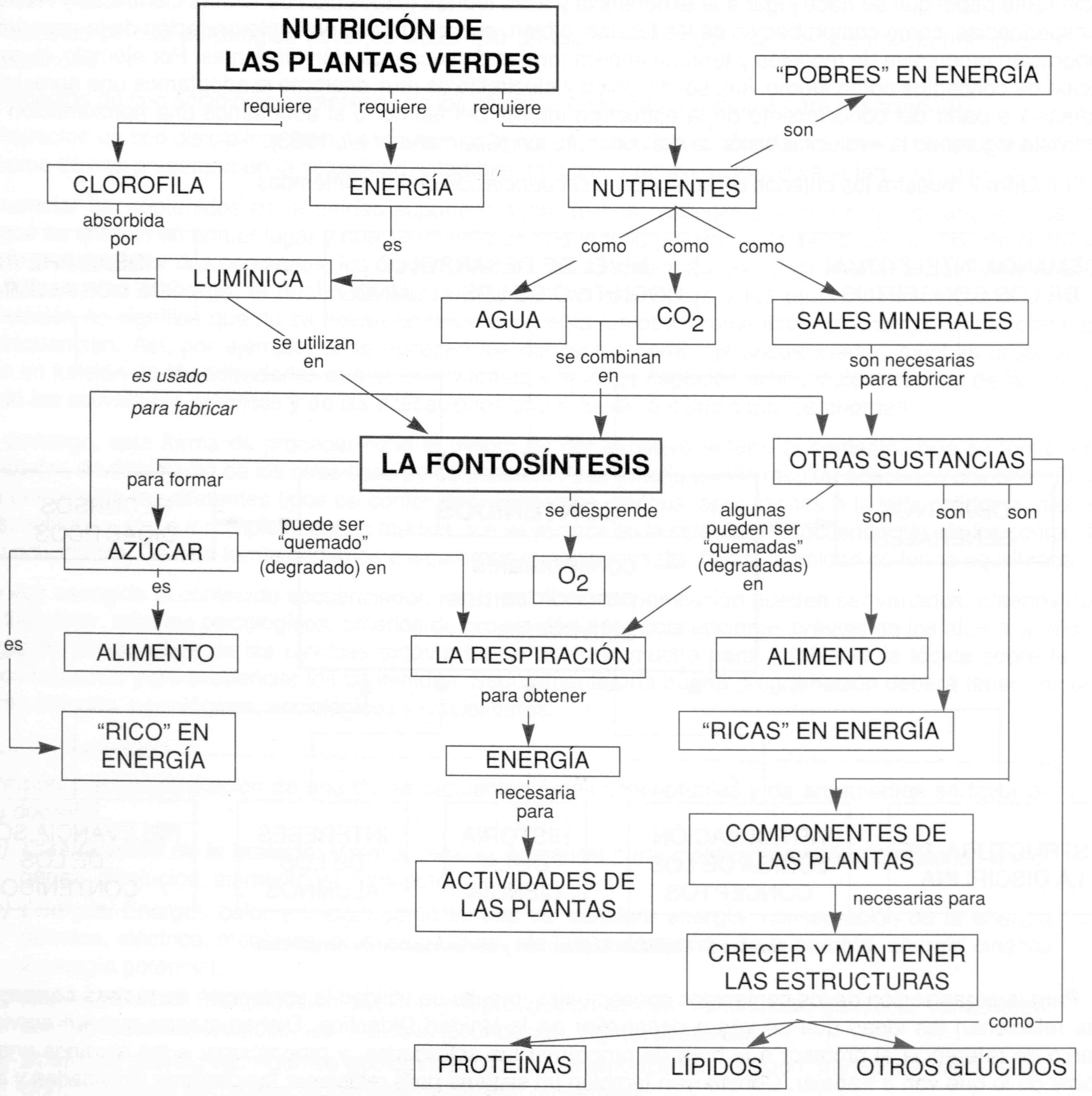 Estructura de los monosacáridos - YouTube